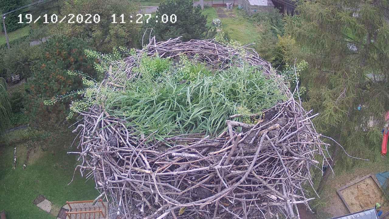 Čapí hnízdo - online